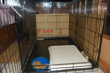 大型犬用のケージの写真2