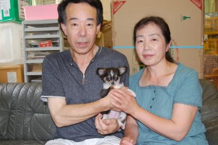 チワワの子犬を購入いただいた、愛知県新城市の児玉様
