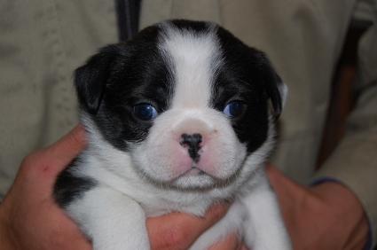 ミックス犬の子犬の写真No.200812071