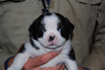 ミックス犬の子犬の写真No.200812072