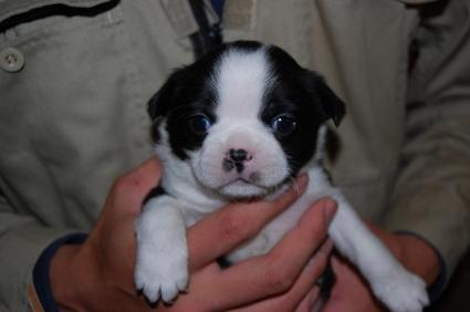 ミックス犬の子犬の写真No.200812073