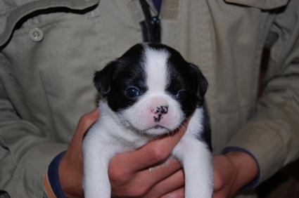ミックス犬の子犬の写真No.200812074