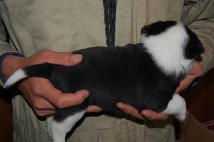 ミックス犬の子犬の写真No.200812075-2