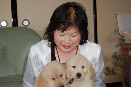 ゴールデンレトリバーの子犬をご購入の神奈川県伊勢原市の川副様