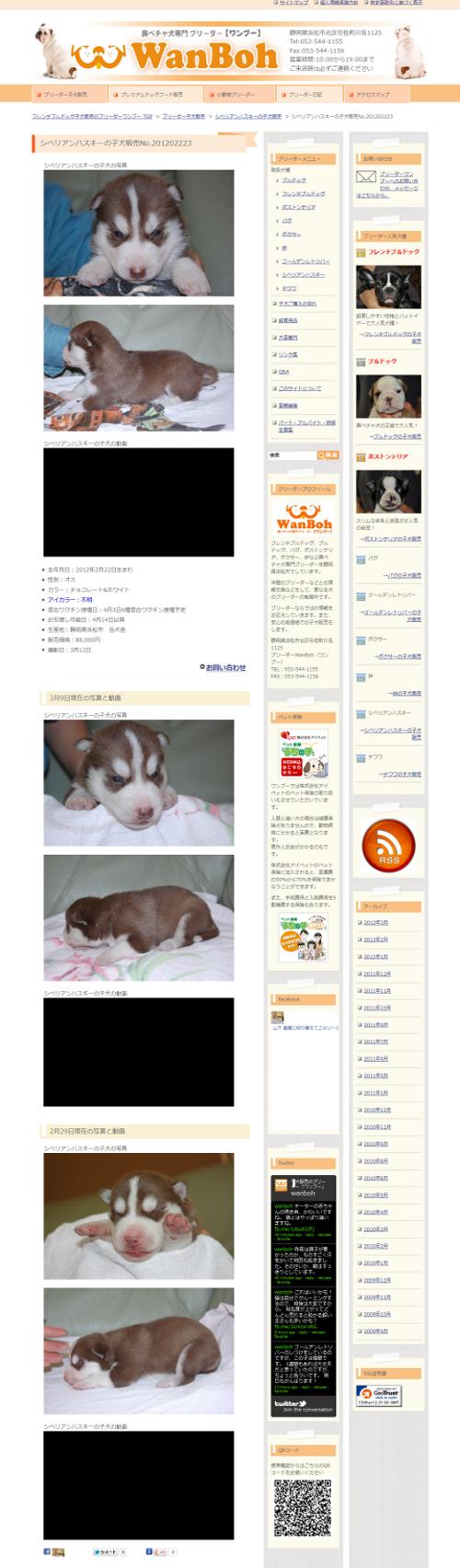 シベリアンハスキーの子犬販売no.201202223