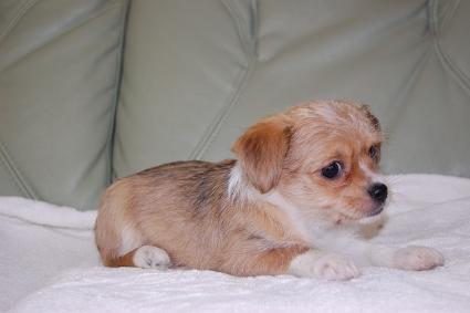 ミックス犬の子犬の側面写真