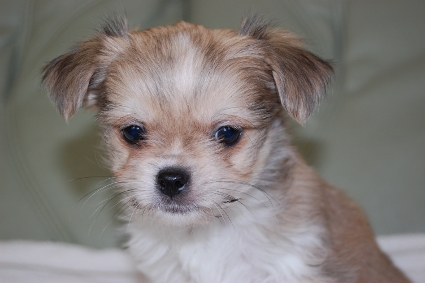 ミックス犬の子犬の写真